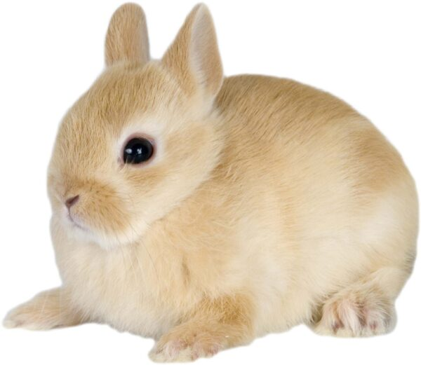 Conejo Super Toy