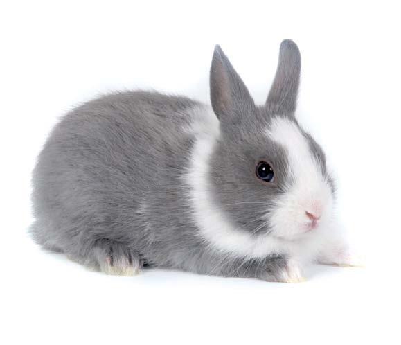 Conejo toy holandés azul claro. Compralo aquí¡